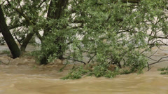 Turbulent river flooded trees,close up,torrent,flash flood. - stock footage
