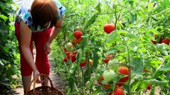 Vegetable greenhouse - stock footage