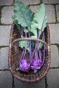Basket of blue turnip cabbages, Brassica oleracea var. gongylodes L., elevated - stock photo