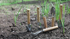 Set of the garden manual tool on a bed with fresh green shoots of onions. Stock Footage