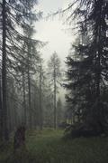 Austria, Tyrol, Kals am Grossglockner, forest - stock photo