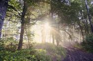 Stock Photo of Germany, North Rhine-Westphalia, Forest, Morning mist and sunrise
