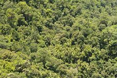 Australia, New South Wales, Mullumbimby, rainforest canopy of Nightcap National Stock Photos