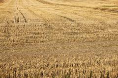 Yellow field Kuvituskuvat