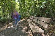 Stock Photo of bench and kids hiking in the rainforest of the Dorrigo National Park