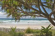 Stock Photo of Australia, New South Wales, Byron Bay, Broken Head nature reserve, cabbage tree