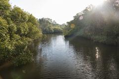 Australia, New South Wales, Pottsville, Cudgera Creek in back light Stock Photos