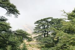 Cedar forest, lebanon Stock Photos