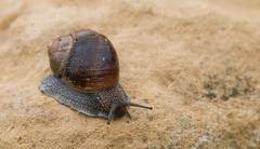 Snail, slow motion Stock Photos