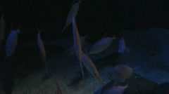 A lot of fish from the abyss - stock footage