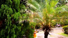 Rainy season in the tropical region. Palm tree in the wind. Video shift motion Stock Footage