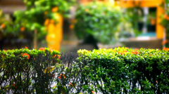 Fence of bushes in green park on time rain. Video shift motion Stock Footage