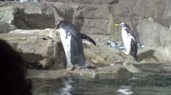 Penguins walking Stock Footage
