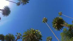 4K. Driving under palm trees in Los Angeles, Beverly Hills, California Stock Footage