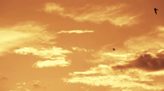 A lot of swallows are flying. Sunset as background - stock footage