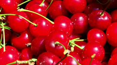 Freshly picked sour cherries closeup Stock Footage