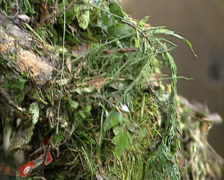 Collecting biodegradable waste  - close up Stock Footage