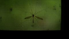 Large mosquito silhouette blocked by screen window door trees shallow focus Stock Footage