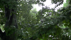 Rain falling in slow motion through trees Stock Footage