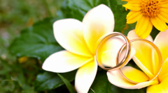 Close up wedding gold rings on the Thai flowers frangipani. Macro video shift Stock Footage