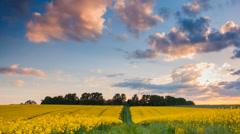 Yellow rape field. landscape of Ukraine Stock Footage