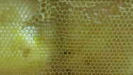 Stock Video Footage of Close-up of a honeycomb in a bee farm