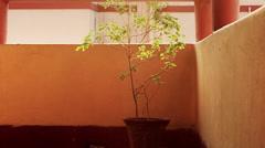 The sacred tulasi or sacred basil plant. Stock Footage