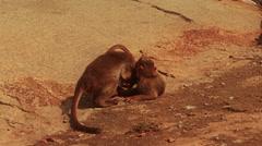 Two baby monkeys play wrestle. True slow motion. Stock Footage