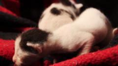Cute newborn baby kittens. Stock Footage