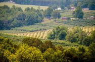 Stock Photo of vinyard in a distance of virginia mountains