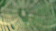 Spider Web with Dew Drops rack focus Stock Footage