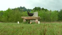 Druidic altar 02 Stock Footage