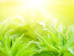fresh green grass (shallow dof) - stock illustration