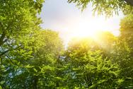 Stock Illustration of sunshine in forest