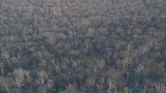 Dead Trees Marshlands Stock Footage