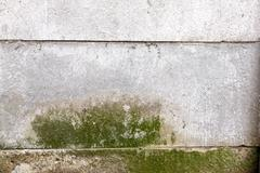 Green mold indicating damp on precast cement wall Stock Photos