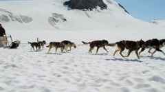 Alaskan husky dogs used for dog sled adventures, USA Stock Footage