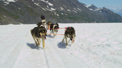 View of dogsledding Chugach Mountains, Alaska, - stock footage