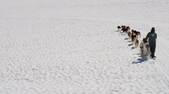 Aerial view dogsledding team working, USA - stock footage