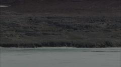 Polar Bear Ice Swim Stock Footage