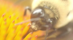 Bee close Stock Footage