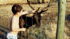 Kid Hand Feeding a Deer Stock Footage