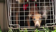 A dog in a cage.  4K. Stock Footage
