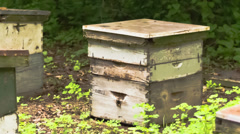 Wooden framed beehives stacked in field - time lapsed Stock Footage