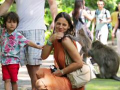 Family looking on monkeys in reservation in Bali, Indonesia Stock Footage