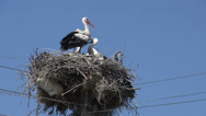 Stock Video Footage of Stork mother flies away from here young storks in a nest