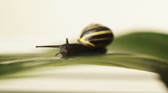 Snail crawling over finish line Stock Footage