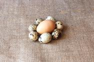 Stock Photo of some eggs of the quail and one of the hen