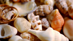 Close up golden wedding rings on shells. Macro video shift motion Stock Footage