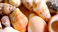 Close up cockleshell, shells and seashells. Macro video shift motion - stock footage
